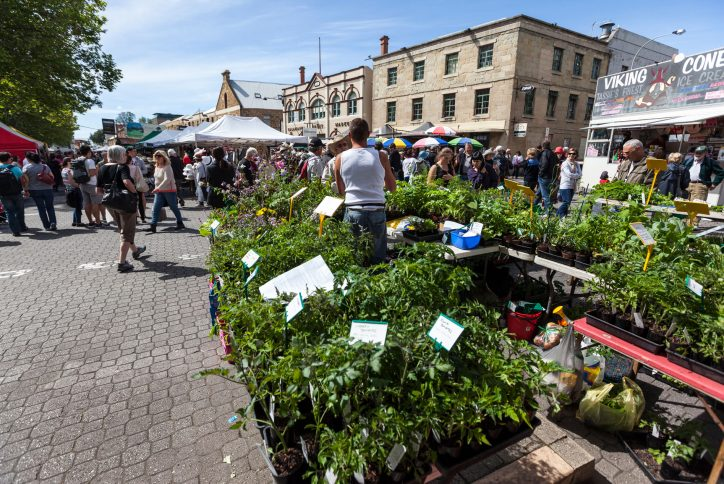 Salamanca markets on a Saturday in Hobart, with tourists and sightseers shopping and enjoying the markets
